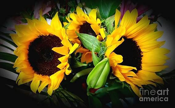 Sun Flower by Rose Wang