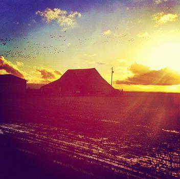 Sun on Barn by Anna Bree
