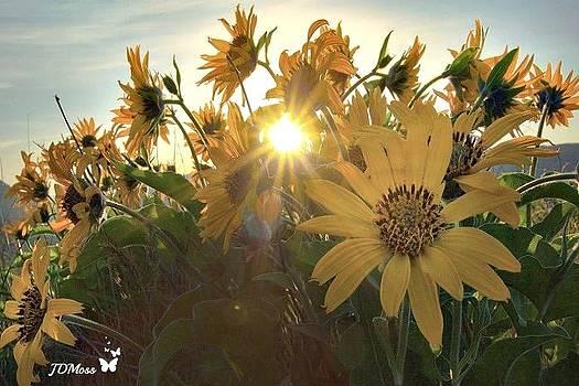 Sun Peaking by Janet Moss