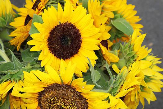 Sunflowers by Diana Dimitrova
