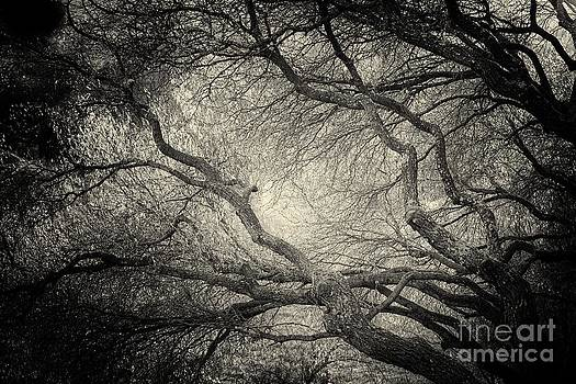 SunLight Through Branches of a Tree by Nicola Fiscarelli