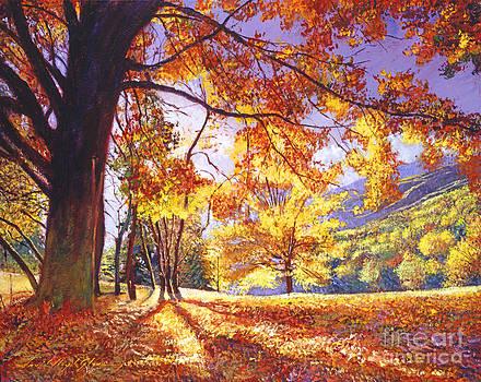 David Lloyd Glover - Sunlight Through The Trees