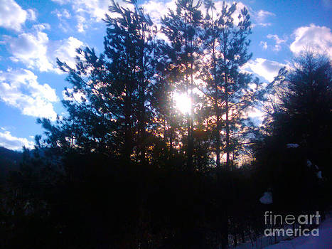 Sunlight Winter Pines by Seay Harshaw Delgado