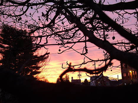 Sunset through the trees by Terrilee Walton-Smith