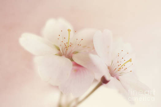 LHJB Photography - Sweet Blossom
