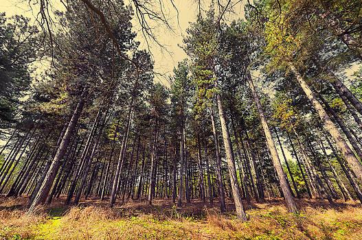 Svetlana Sewell - Tall Trees