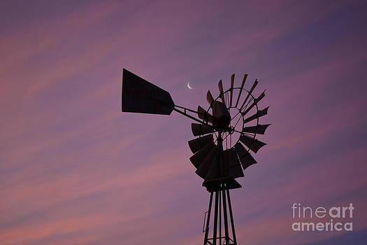 Texas Sunrise II by Gale Cochran-Smith