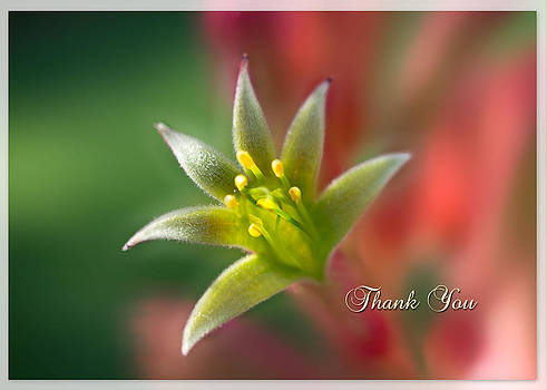 Thank You Note Card by Mariola Szeliga