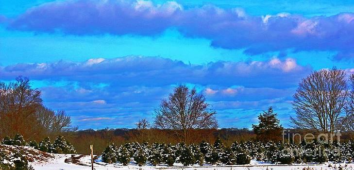 The Beauty Of Nature by Judy Palkimas