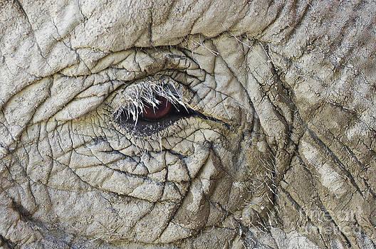 Angela Doelling AD DESIGN Photo and PhotoArt - The elephant eye