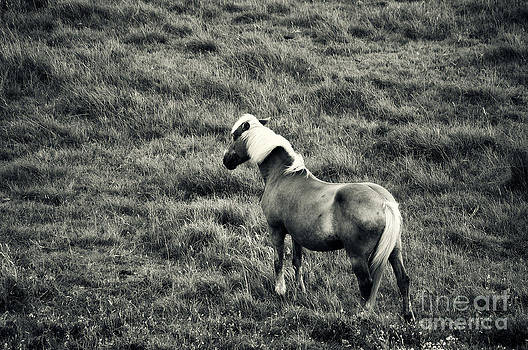Angela Doelling AD DESIGN Photo and PhotoArt - The horse