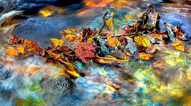 The Leaves Battle by Dennis Sabo