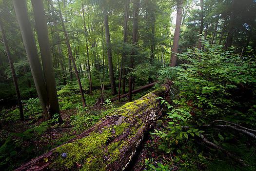 Thru the Woods by Victoria Winningham