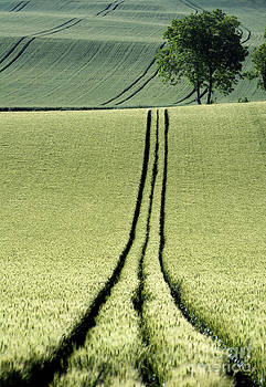 BERNARD JAUBERT - Tire tracks in a wheat field. Auvergne. France.