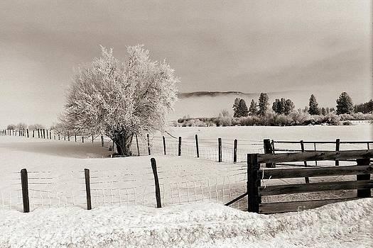 Tree in Winter by Steve Patton