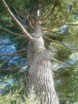 Tree of life by Andreea Alecu