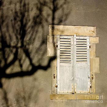 BERNARD JAUBERT - Tree shadow