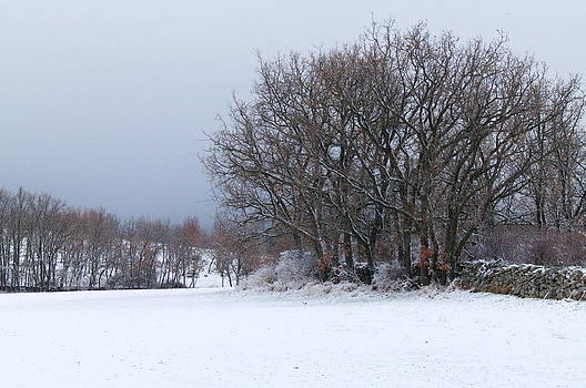 Trees and snow  by Gaitero
