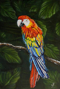 Tropical Layover by Bill Yurcich