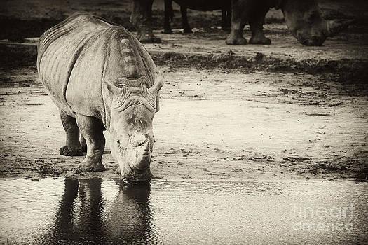 Nick  Biemans - Two White Rhinos