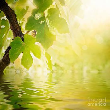 Mythja  Photography - Vine leaf