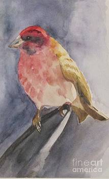 Watercolor Wren by Robin and John Hassler