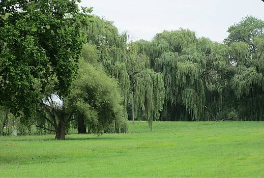 Weeping Willows by Marian Jenkins