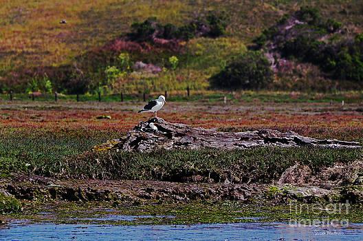 Susan Wiedmann - Western Gulls Nesting in a Log