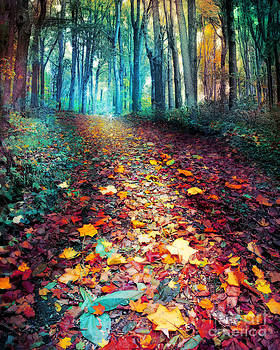 Where leaves gather by Gina Signore
