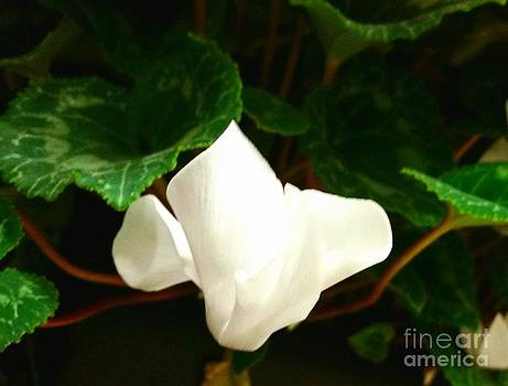 White Flower by Rose Wang