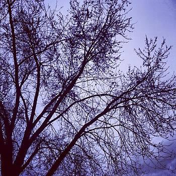 Winter Blues by Toni Martsoukos