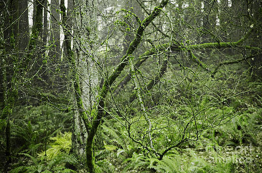 Charmian Vistaunet - Winter Maple Branches