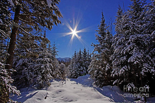 Winter Wonderland by Lloyd Alexander-Pictures for a Cause