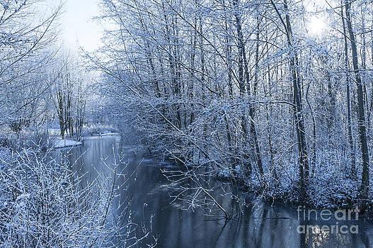 Svetlana Sewell - Winter Wonderland