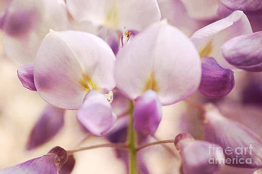 LHJB Photography - wisteria blooming