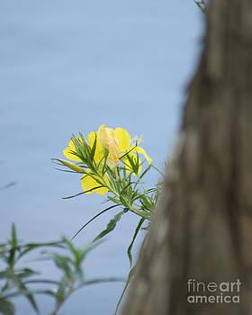 Yellow Wild Flower by Sherry Vance