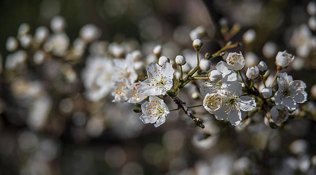 Blossom by Nina Peterka