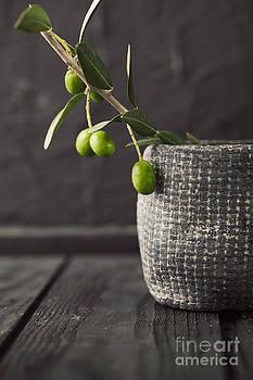 Mythja  Photography - Fresh olives