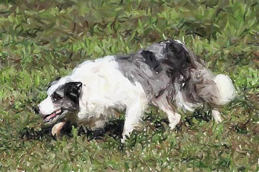 Border Collie Dog Portrait by Olde Time  Mercantile