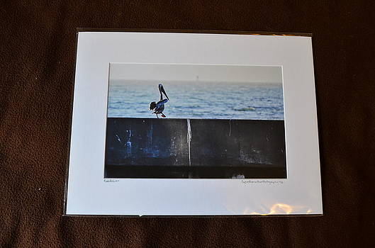 12x16 Matted - Cali Pelican by Becky Anders