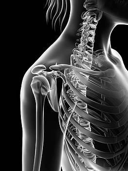 Human Shoulder Joint by Sebastian Kaulitzki