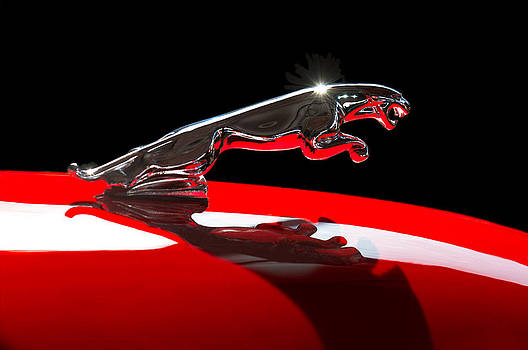 Jill Reger - 1961 Jaguar Kougar Hood Ornament -0569C