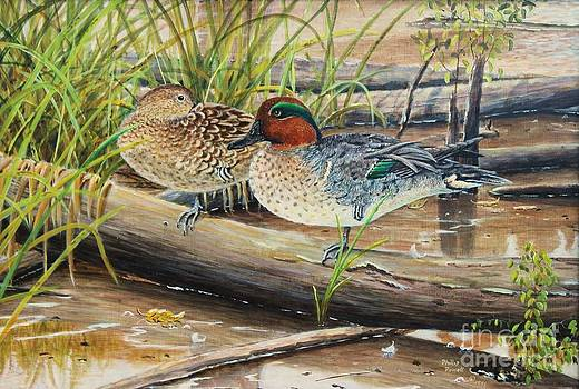 1992 Kentcky Duck Stamp - Green-winged Teal by Phillip  Powell
