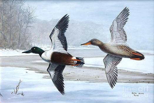 1997 Kentucky Duck Stamp - Shovelers by Phillip  Powell