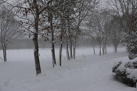 Paul SEQUENCE Ferguson             sequence dot net - 2 2014 Winter of the SNOW