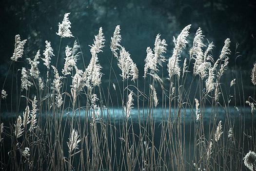 Afternoon by Nina Peterka