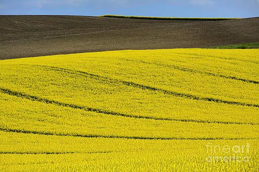 BERNARD JAUBERT - Agricultural landscape.