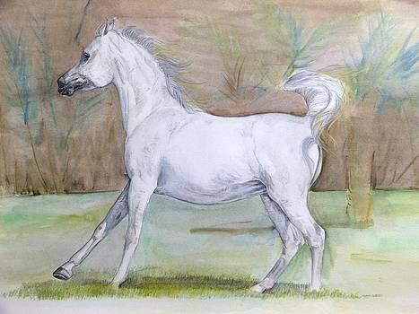Another arabian horse by Janina  Suuronen