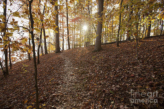 Jonathan Welch - Autumn in Lake Norman State Park