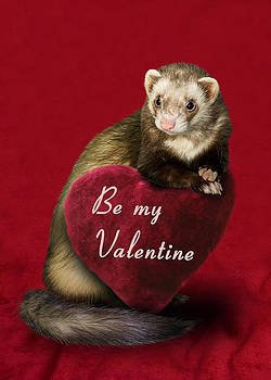 Be My Valentine Ferret by Jeanette K